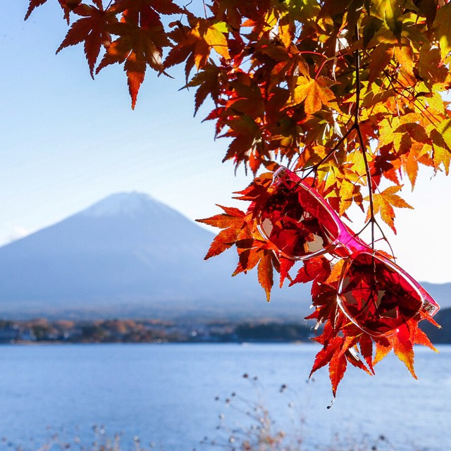 Pink Originals camouflaged in Japanese maple at Mt. Fuji.  What's the most faraway place you and your Sunskis have visited? We've seen them all over the world - Asia, Africa, South America... I think the only continent we're missing is Antarctica!