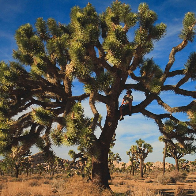 @kylormelton from Joshua Tree - nice perch, man! #getoutthere and enjoy the weekend. #adventureworthy