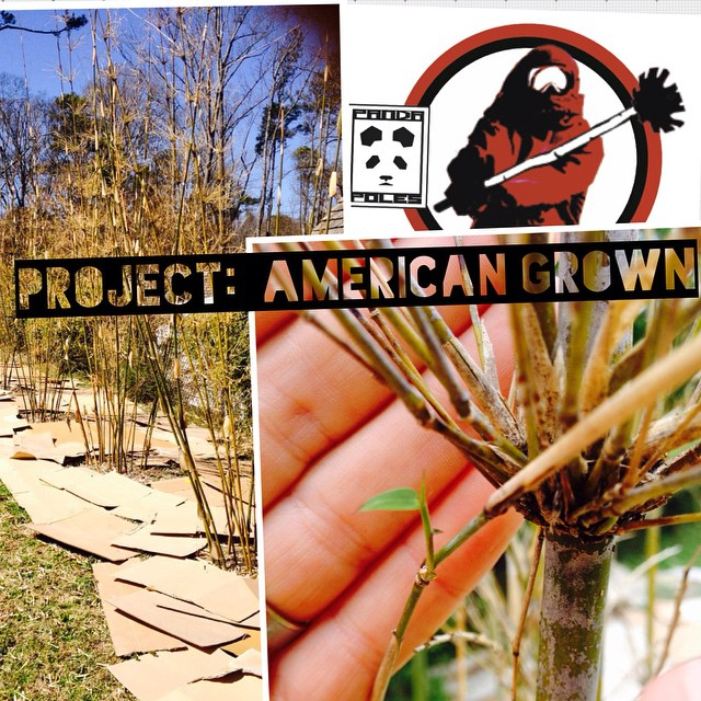 Project: American Grown | Update #3  After what was the coldest winter on record in Atlanta, we were not entirely sure how well our 5 bamboo plants would survive their first year in the ground. However, the plants have shown true resilience, and not...