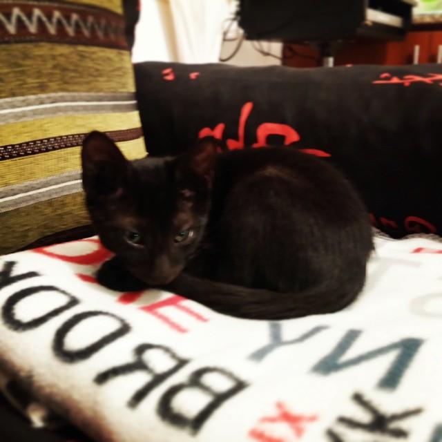 #Cat #loveCat #blackCat #love #nice #cute #eyes #MyNameIs ???