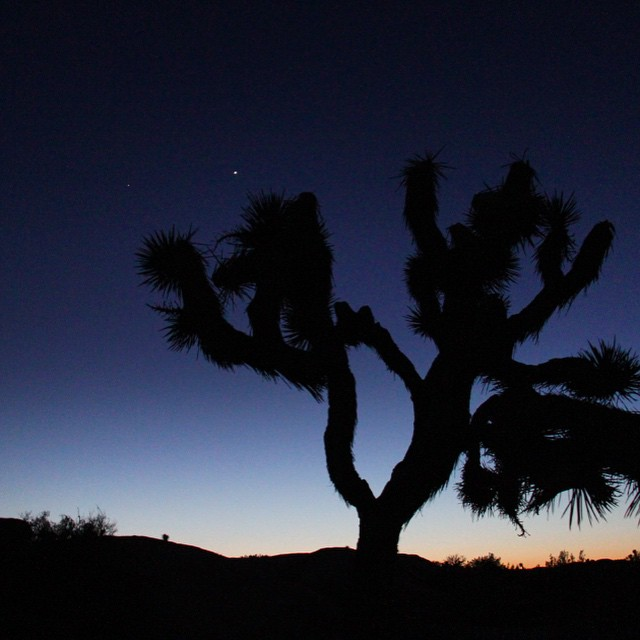 I call this Stars & Stripes// Truly mind boggled by the amazingness of sunset in Joshua Tree