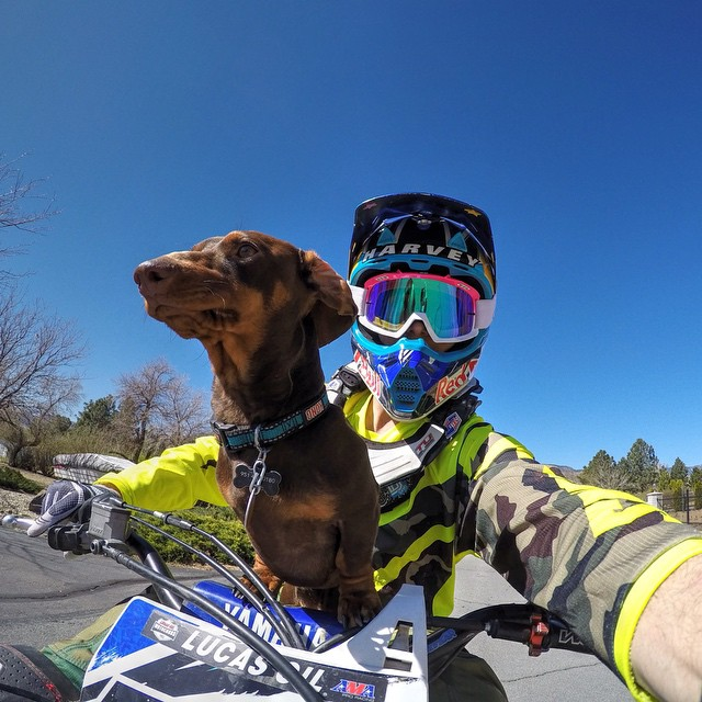 Photo of the Day! Easy Rider. @AronHarvey776 and Bear the Weiner Dog out for a cruise. #GoPro #GoProMoto