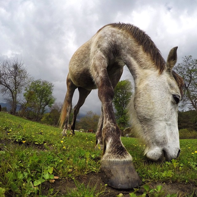 Happy #EarthDay! Photo by Hakan Selamoglu. #GoPro  It's GoPro Animal Month! Have rad animal content of your own? Click the link in our profile and share it with us!