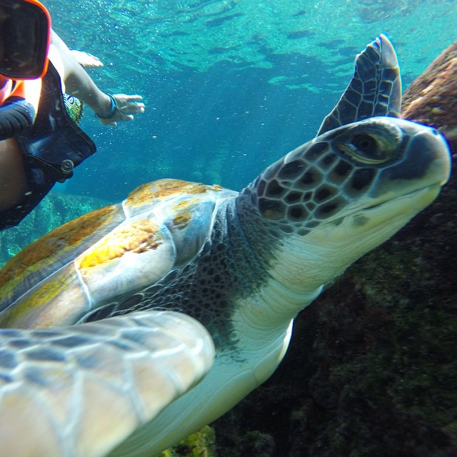 Photo of the Day! Turtle Selfie. Photo by Nik DePasquale. #GoPro #turtle
