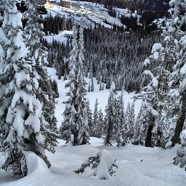 #Treelines for @pistoleboardshop @mtspokane today. Finally ! #powpow #whiteroom #SundayFunday