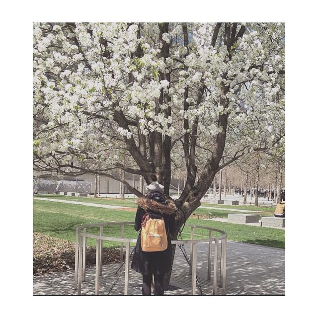 Mica, NY en flor y la mochila navajas de viaje | NY, USA.