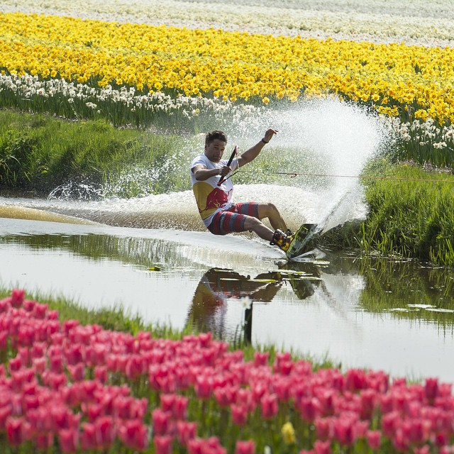 Do you mind watering the tulips @duncanzuur?