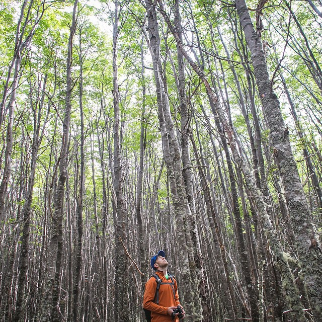 Our friend Matt taking a moment to appreciate the Northern Patagonian forest. This was shot by our newest team member @annie.nyborg, who is a prolific #traveler and a very talented #photographer. She fits right in.