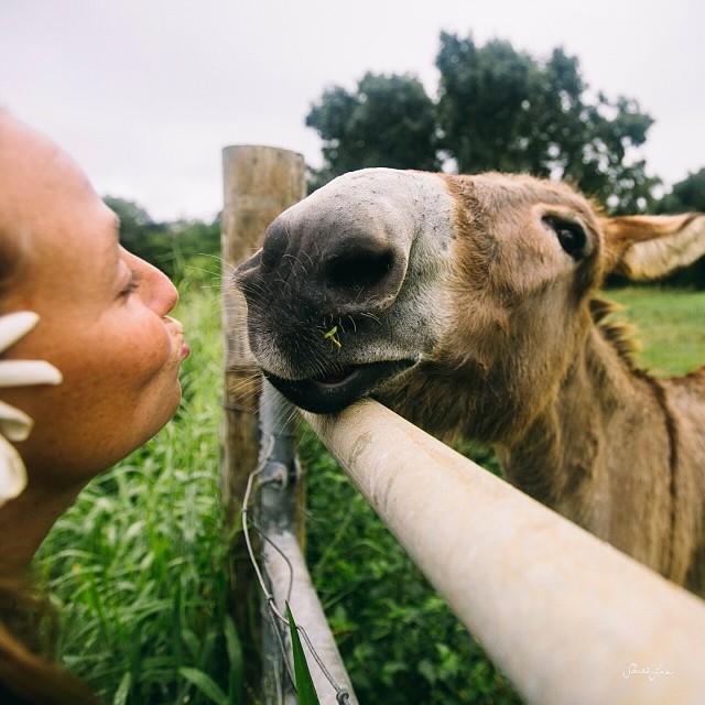 Kisses from Romeo the donkey. @alisonsadventures