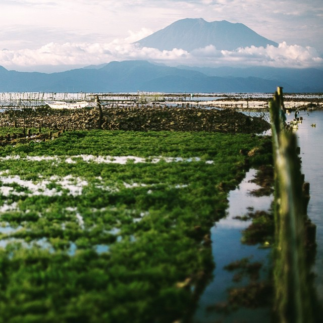 In Nusa Lembongan, the locals harvest this seaweed at low tide, which is eventually sold and added into cosmetic products. At higher tide, you paddle out over this seaweed farm because it's completely submerged by up to three feet of water!...