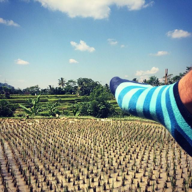 Miércoles, qué lindo es viajar. Hoy las Suarez desde los arrozales de Ubud #Bali #MediasConOnda #YoUsoSuarez #style #socks