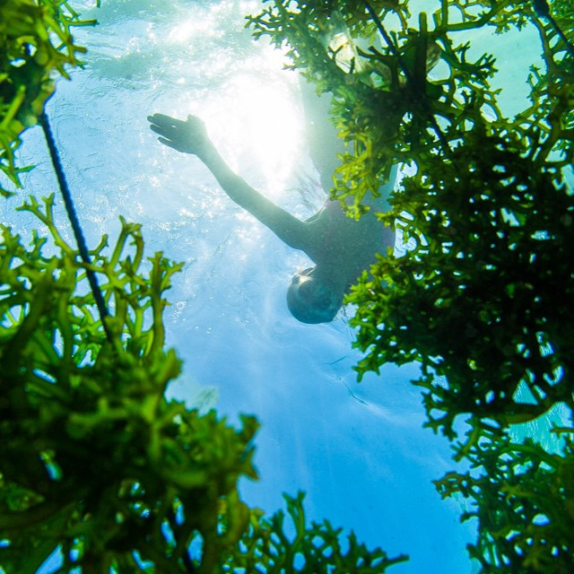 At high tide you can swim over the seaweed farm on #Lembongan island...next time you buy a beauty product it could have some of this seaweed in it! I swam around in the fields of green for quite a while so I'm hoping some of it rubbed off on me:-)