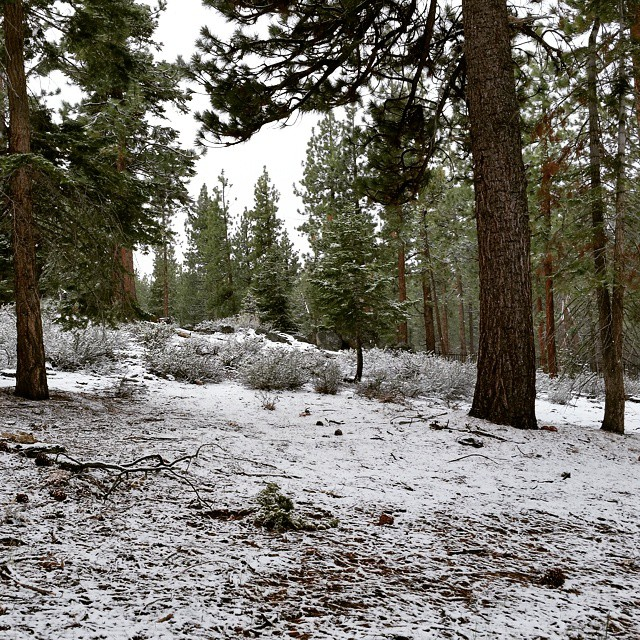 A bit more of the white stuff this morning.  Seems like we've gotten more #snow in April and May than all of #winter in #tahoe!  #spring #laketahoe #southshore #graniterocx