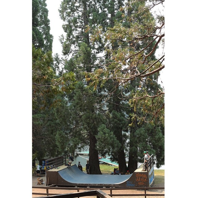 The view looks good at @elementskatecamp >>> sign up today for camp this summer at Skatecamp.org and come skate in one of the most beautiful places in the world, amongst some of the largest trees on the planet >>> #elementskatecamp