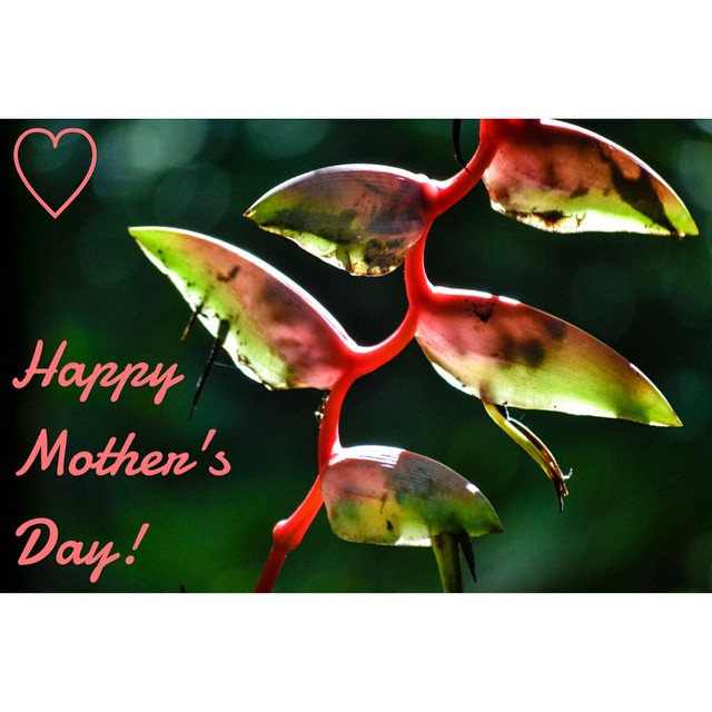 Shout out to all the Moms! Happy #MothersDay (not in Costa Rica but in most other places in the world)... we wish you all a wonderful day today and every day.  And lest we forget our beautiful Mother Earth ~ what an amazing planet we get to call home....