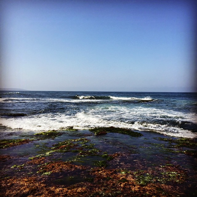 #lowtide exposes a whole new tide pool world #goexplore #lajolla #california #sandiego #wandering