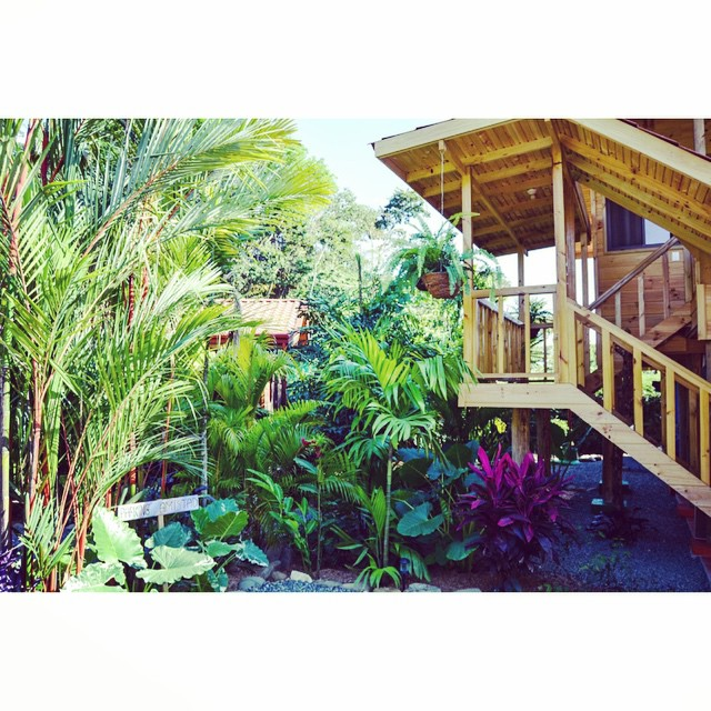 Check out the jungle, filling in all the spaces around the Bodhi Surf Lodge. Love the tropics! #MotherNatureMonday #jungle #wildCostaRica