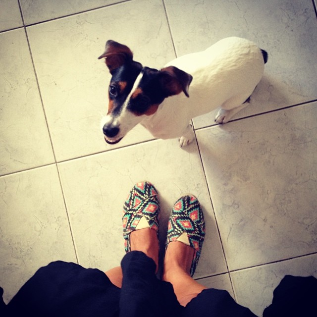 #PuppyLove Pets ❤️ Paez #paez #puppy #dog #pet #shoes #love #instapet #style #home #look