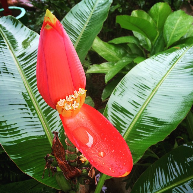 It's a lovely rainy Friday morning in the tropics. Have a great weekend, everyone!