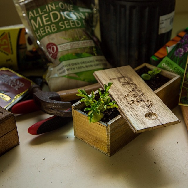 @captain_potter turned one of our wooden boxes into a pot for sprouting watermelons // check out his feed to see how he always goes #againstthegrain
