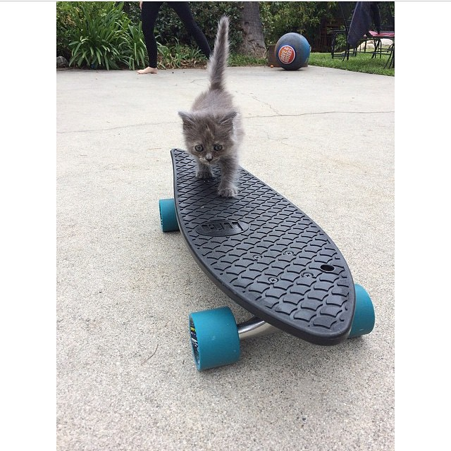 We heard there are a couple of cats riding our boards.... @theportlandpileup snapped one in action! #NetsToDecks