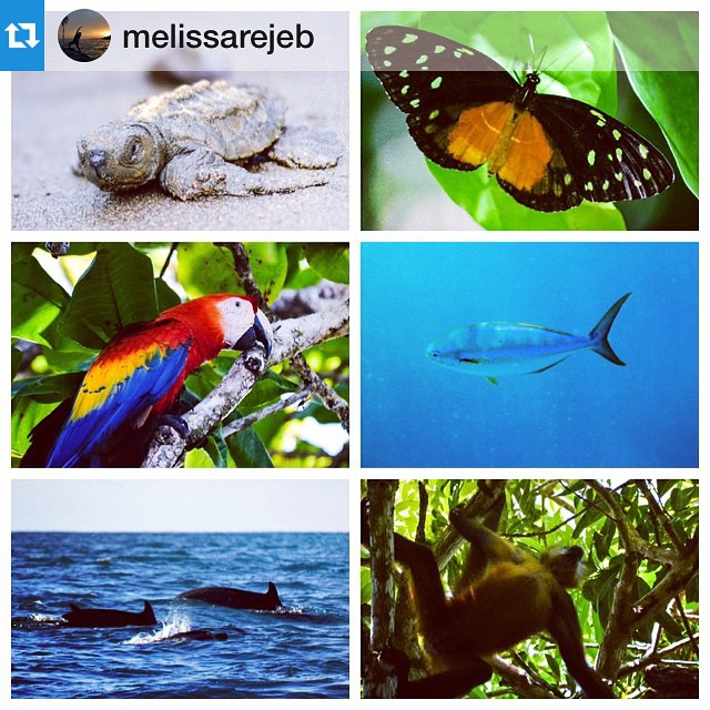 Happy International Biodiversity Day! What beauty surrounds us!  #Repost from the wonderful @melissarejeb (photos taken in and around Bahia Ballena!)