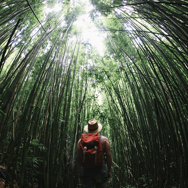 Nestled deep in the rainforest you will find @joshuaparker soaking up the beginning of summer.