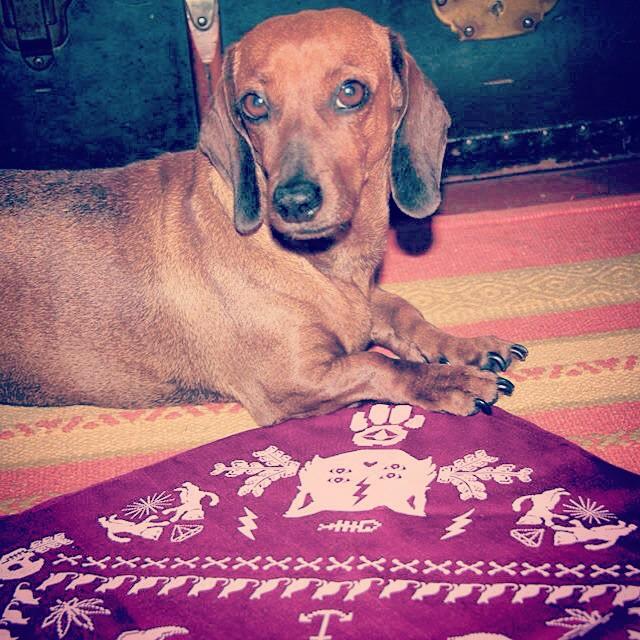#salchicha #style #bandana ❤️ @juanct0 @juli_tome