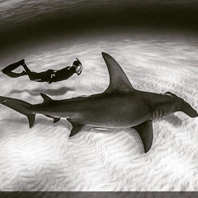 #ReefWeekend Ya estamos acariciando el fin de semana...alguna aventura como la de la foto por delante? Que tu fin de semana no sea uno mas #Freediving #reef  PH: Ken Kiefer