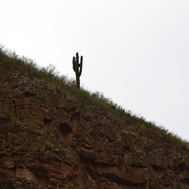 La naturaleza es sabia... he aqui un paravalancha natural. #agean_fotografia #cerro #paravalancha #noa #norteargentino #argentinaig #argentina #captus #mochilero #igs_photos #ig_great_pics #onlyinsouthamerica #loves_latino #cardon #bg_shots...