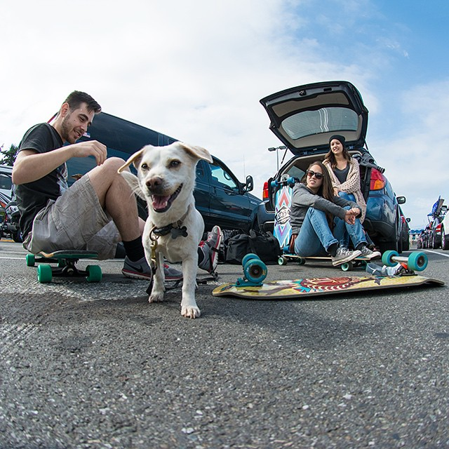 Weekend adventures are always better with a longboards (and an occasional puppy). #roadtrip #skatetrip #longboard #longboarding #longboarder #dblongboards #goskate #shred #rad #stoked #skateboard #skateeveryday #ferrylines #pnw