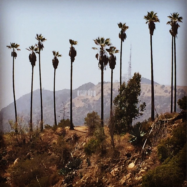 Getting Outdoorsy in LA #SoLA #California #hollywood #hiking #LA #gelpandawedding