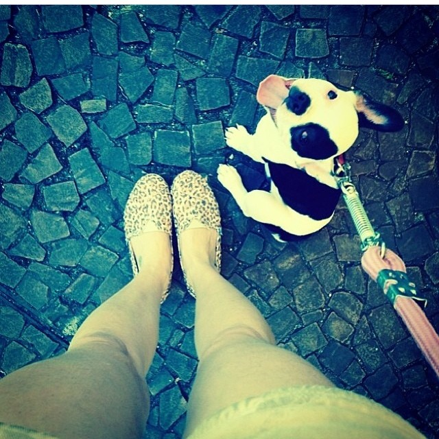 Puppys love Paez #Paez #paezlovers #pet #dog #puppy #shoes print #paezselfie