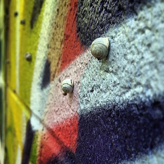 Caption this photo please..... • • #atx #austintx #texas #tx #spratx #graffiti #snail #grafite #streetart