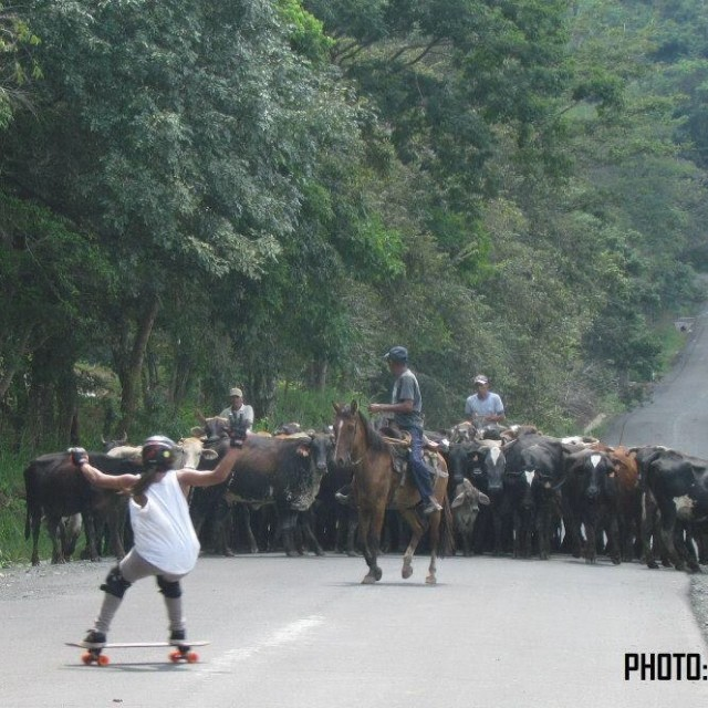 Any problem? @carobarberena from #longboardgirlscrew #panama knows how to share the road. Edwin Rios photo #moo