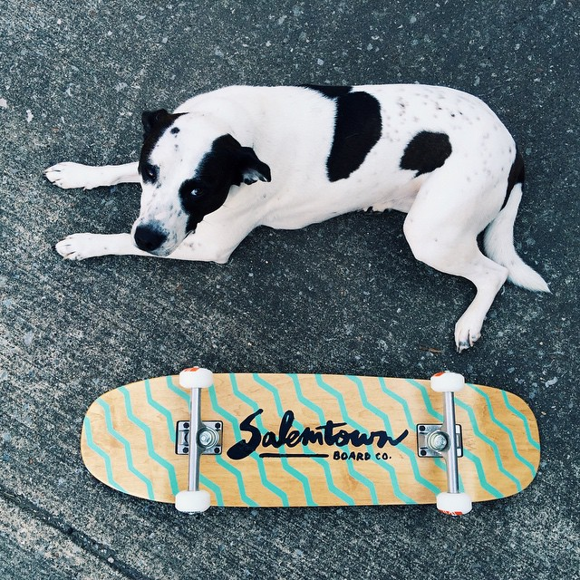 One of these is available on the site. #handmadeskateboard #Nashville #rescuedog