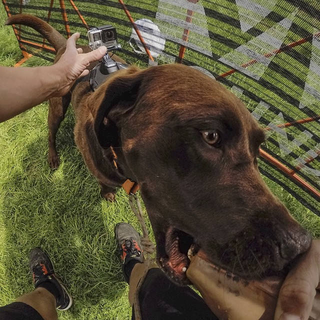 Hanging behind the scenes with some of #GoProMtnGames top athletes, including this pup who's ready to compete in the annual Dock Dogs competition today #GoPro #Dogsofinstagram #FetchMount #HERO4