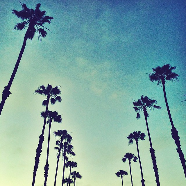 Rise and Grind it's Friday Hooligans. #hovenvision #teamhoven #sandiego #california #tgif #friday #catchinabuzz #keepinitreel #vibes #palmtrees #goodmorning