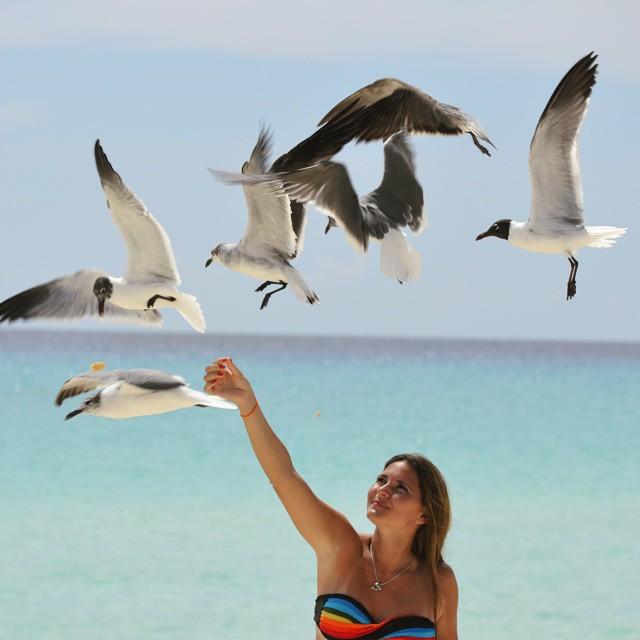 Cuando uno esta de vacaciones, hace cosas sin importar cuanto tiempo este parada para darle de comer a las gaviotas. Yo me lleve la mejor parte:  estuve sentado tomando sol... jejeje #gaviotas #playa #beachlife #beach #igs_photos #ig_great_pics...