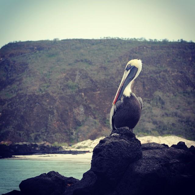 #localsonly en #cerrobrujo #sancristobal #Galapagos
