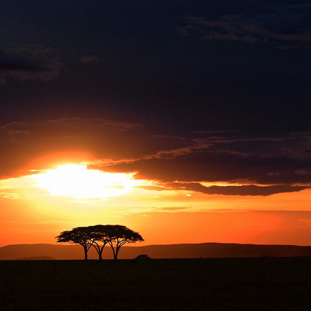 Gotta post the classic Lion King sunset pic before I leave Africa