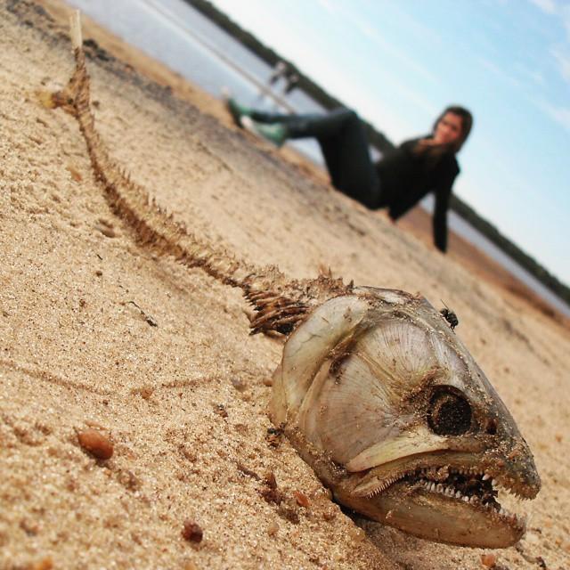 Tipica mentira de los pescadores: No sabes lo bien que pesque! Saque una tararira de 1.50 mts!!! #agean_animals #agean_fotografia #all_my_own #fosil #tararira #fish #fishing #lieb #entrerios #argentina #fotografia #dientes #natural #optica #angulo...