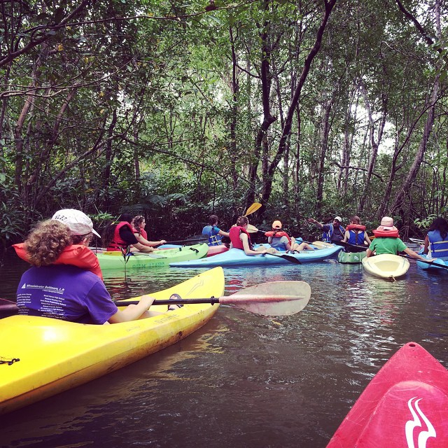 Learning and grooving through the mangroves that mans gone destroying... With Protecting the Pacific students /// @glateens #glateens #gla @bodhisurfschool #bodhisurfschool #mangroves #kayaking #costarica #puravida #beyondthesea #beyondthesurface...