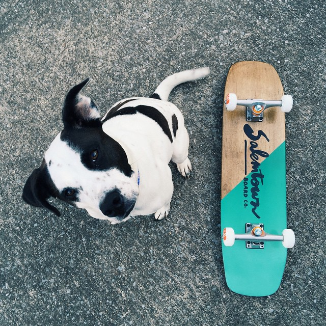 Lots of boards up on the site. (Piper not included) #handmadeskateboard #Nashville