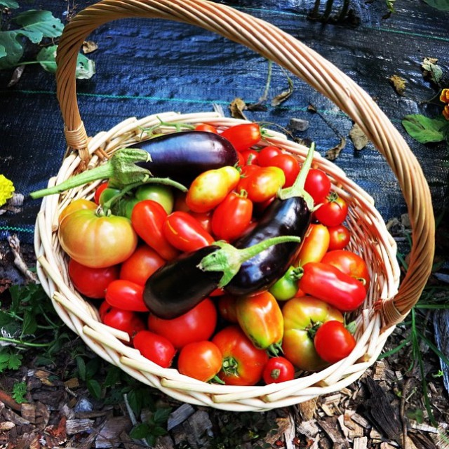 Happy #WorldMeatFreeDay! Check out this basket of veggies from our friends and nonprofit partner @greenbronxmachine. What does your meat free dish look like? #meatlessmonday #oneplanet