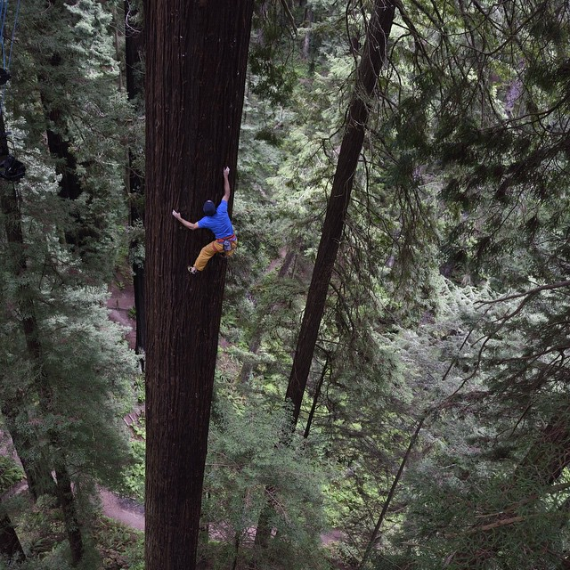 @chris_sharma free climbs up a massive Redwood Tree in #GiantAscent. Click the link in our profile to watch the full video.
