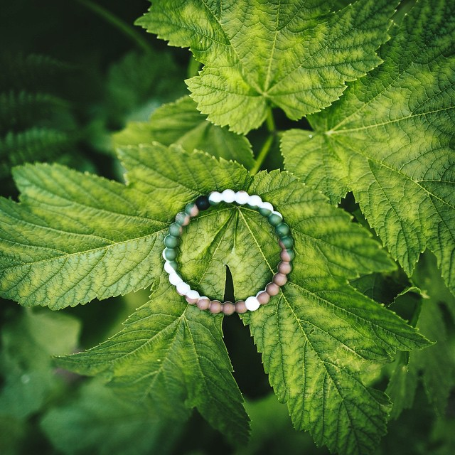 Spotlight on our wildlife. Your purchase of a wild lokai will help us protect it! #livelokai Thanks @bdorts