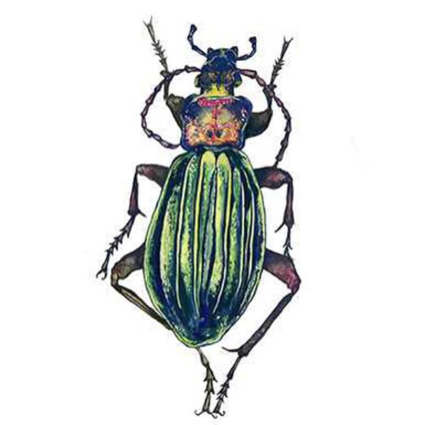 """Carabidae"" Gouache on paper, 2014.  Artwork created by Team rider Yvonne Byers--@yvonzing and available for sale at BonzingSkateboards.com!  #yvonnebyers #bonzing #sanfrancisco #skateboard #shapers #artists"