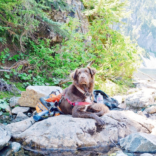 """Our adventure girl @thatnwdog photographed by my wife @amouery on our last adventure through Snow Lake in Washington. Such a gorgeous, dog friendly, and fun hike - would definitely suggest it!"" -@pnwonderland #pnwonderland"