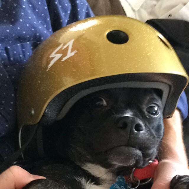 Found this one @skatecats . Ha ! Chubs looks good with the gold glitter Lifer helmet. #goodlookin